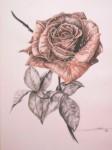 Obras de arte: Europa : España : Andalucía_Granada : churriana : Una rosa fresca