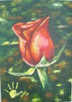Obras de arte: America : Colombia : Antioquia : Envigado : Rosa 20053