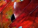 Obras de arte: America : Argentina : Neuquen : neuquen_argentina : OTOÑO DORADO