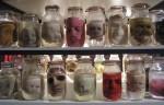 Obras de arte: Europa : España : Murcia : cartagena : Intentos de clonación