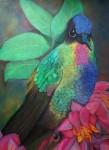 Obras de arte: America : Panamá : Chiriqui : Volcán : fiery throated hummingbird