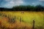 Obras de arte: America : Argentina : Buenos_Aires : Capital_Federal : Vaca en campo