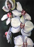 Obras de arte: Europa : España : Andalucía_Granada : armilla : orquidea blanca