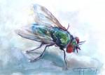 Obras de arte: America : Venezuela : Miranda : chacao : solo una mosca