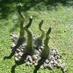Obras de arte: America : Argentina : Buenos_Aires : ituzaingo : Botanic Garden IV