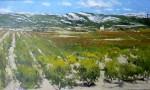 Obras de arte: Europa : España : Madrid : Miraflores_de_la_Sierra : VIÑEDO DE LA RIOJA ALTA