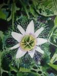 Obras de arte: America : Colombia : Risaralda : Pereira_ciudad : Flor pasiflora