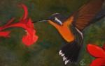 Obras de arte: America : Panamá : Chiriqui : Volcán : Marges' Hummingbird