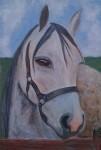 Obras de arte: America : Argentina : Buenos_Aires : palomar : Arabian Horse