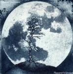 Obras de arte: America : Chile : Valparaiso : viña_del_mar : Creciendo bajo la luz de la luna