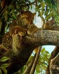 Obras de arte: America : Costa_Rica : San_Jose : SanPedro : siesta en el arbol preferido