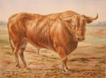 Obras de arte: Europa : España : Comunidad_Valenciana_Alicante : Elche : -Como el toro he nacido...