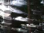 Obras de arte: Europa : España : Cantabria : Santander : hadas en el bosque